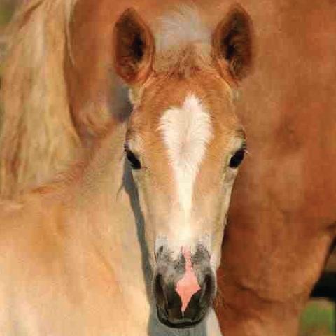Student of the Horse - Foals - Dudmaston Emilia