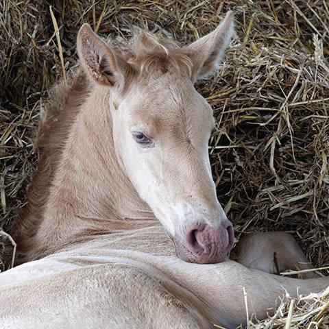 Student of the Horse - Foals - Dudmaston Hermoso