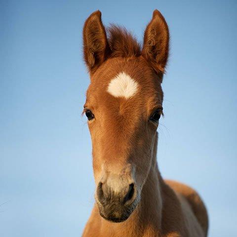 Student of the Horse - Foals - Dudmaston Ofelia