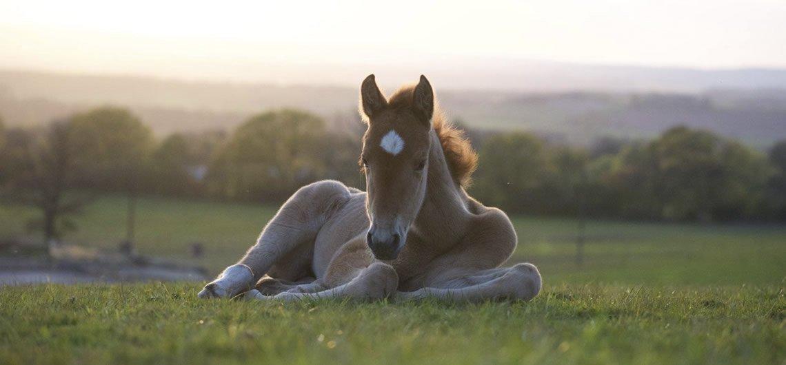 Student of the Horse - Dudmaston Stud